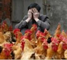 إنفلونزا الطيور في الصين تكلف أكثر من 65 مليار دولار